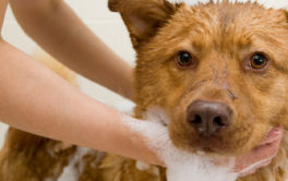 Groom your dog with a shampoo that they'll love