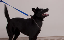 Be the pack leader with your dog by training at the front door