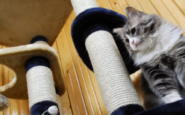 Maintaining a cat friendly home your feline will love