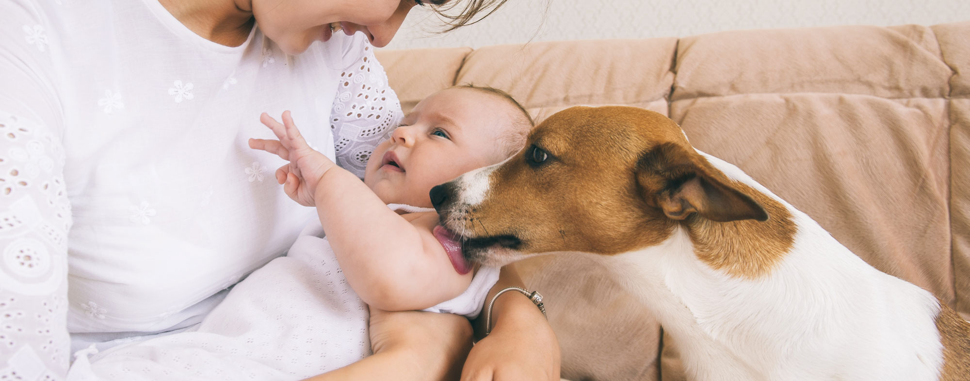 Acclimate your cats and dogs to your new baby
