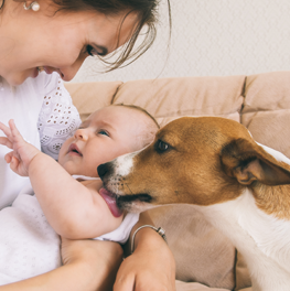 A well-trained dog can be your baby's best friend