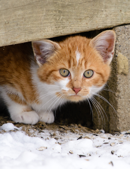 You can try taming a feral cat, but they may not like your home