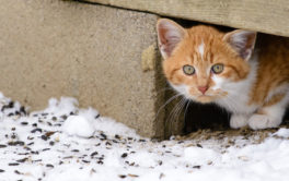 Care for feral cats safely and humanely in your own way