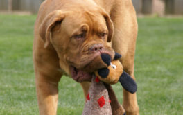 Regular sanitizing is how you should clean a dog's toys