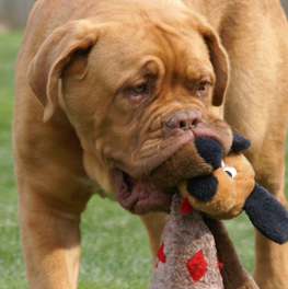 Good dog toys may last, but don't skimp on cleaning them
