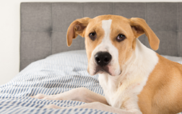 Help homeless pets find a home by fostering them