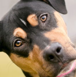 Analyze your dog's DNA to get a leg-up on genetic diseases