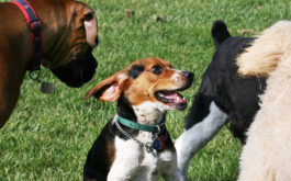 Immunize your dog's before visiting the dog park