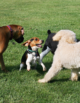 Monitoring your dog at the park ensures fun for everyone