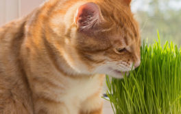 Catnip's an all-natural and non-toxic treat for your pet