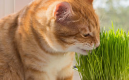 What does catnip do for cats besides excite and relax them?