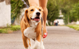 You can partake in fun activities with your dog, like jogging