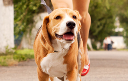 Settle on an activity you and your dog can enjoy together