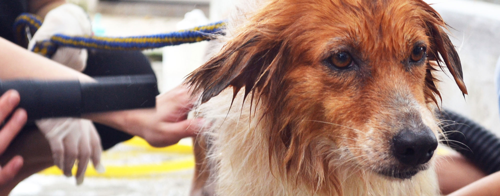 After leaving a dog grooming, your pooch will look fabulous