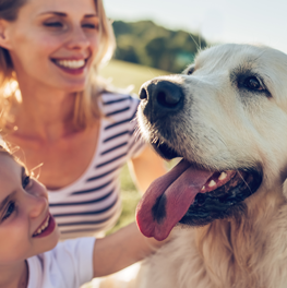 When adopting a dog, consider rescuing one from a shelter