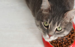 An all-natural diet will keep your cat at a healthy weight