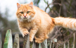 A majority of vets recommend against outdoor cats in general
