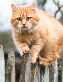 Pests run rampant, endangering outdoor cats who venture