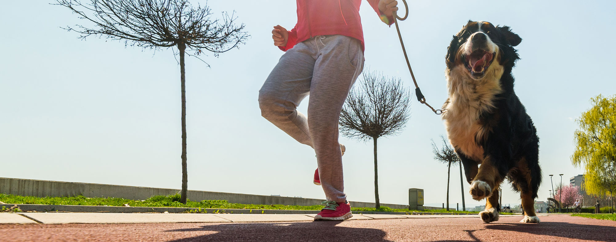 Lose weight and improve your health by running with your dog