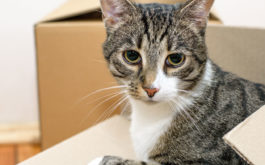 Cats can be fickle, but they'll adapt to the city, like any human