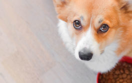 Minimize or eliminate additives to maximize your dog's health