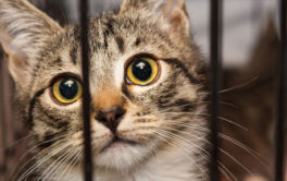 Help local animal rescue groups by fostering a cat temporarily