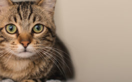 Rereading a favorite book could deliver you a unique cat name