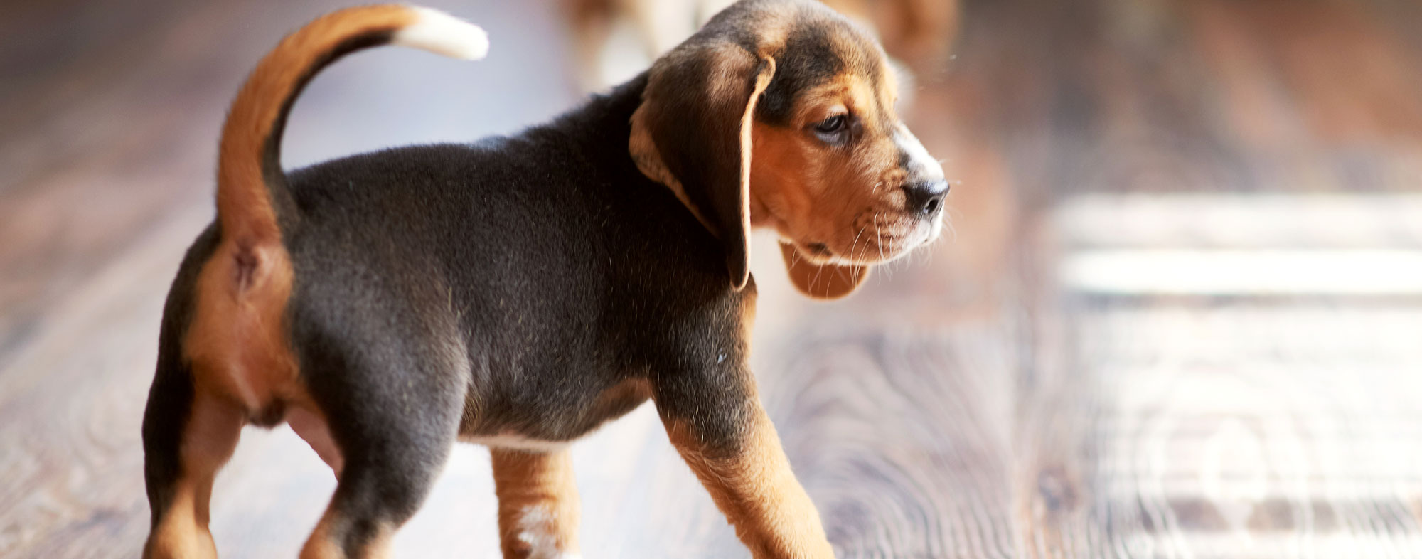Grooming your dogs will preserve your flooring for longer