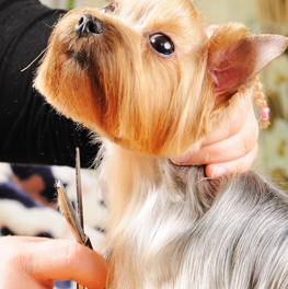 Acclimate your dog to grooming to prevent against parasites