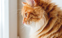 Windows to the outside satisfy the longings of any indoor cat