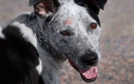 Hot spots on your dog's head could hint at a hidden infection