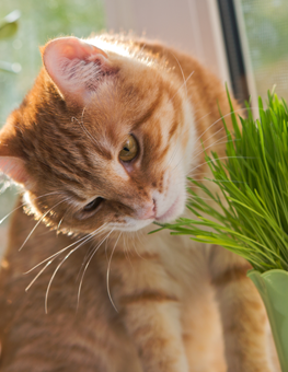 Relaxation for you and your cat is why you give them catnip