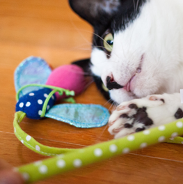 During the winter, get inventive with your cat treats and toys