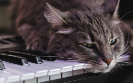 While your cat plays with its toys, why not add a soundtrack?