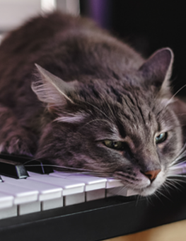 Like plants and humans, cats enjoy classical music on occasion