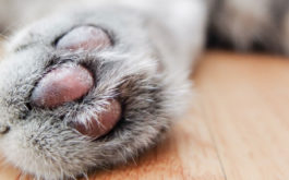 A good rule of thumb: trim your cat's claws every 10-14 days