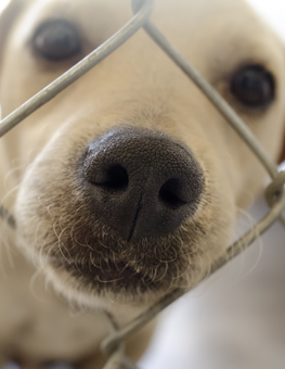 By assisting animal shelters, we improve the lives of dogs and cats