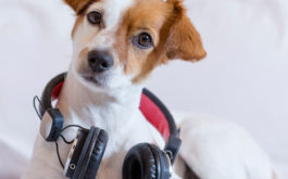Share music with your dog to bond even closer with them