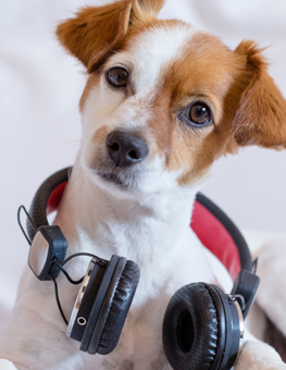 Dog research on music suggests classical soothes our canines