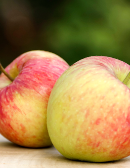 Healthy food for dogs includes apples, pumpkins and bananas!