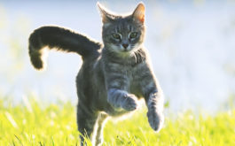 A leash or harness can introduce your indoor cat to the outdoors