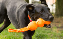 With Hartz, you have your choice of safe and colorful dog toys