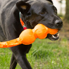 You can depend on Hartz for a variety of dog toys at great prices