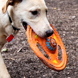 Identify the toys your dog loves most, and use them for training