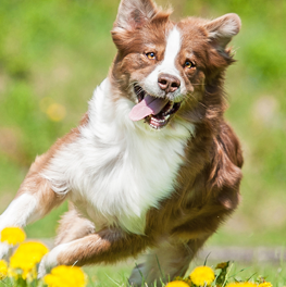 In the spring, your dog needs as much exercise as they can get
