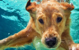 Give your dog plenty of exercise, including opportunities to swim