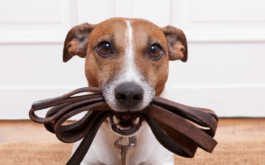 When house-training your puppy, reinforce good behaviors