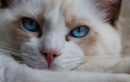 Behavioral problems with your cat may necessitate a vet visit
