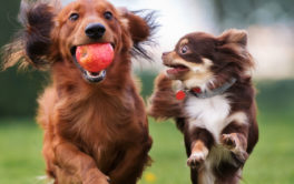 Pairing together similar breeds is how you can socialize your dog