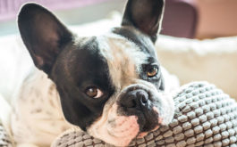Be a responsible in home dog sitter by staying close to the dog